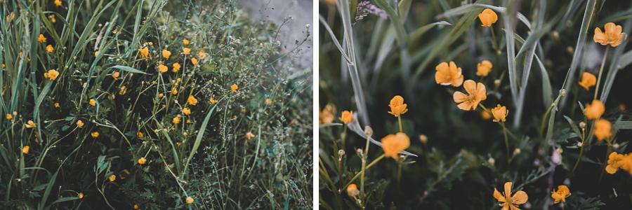 Polana kwiatów