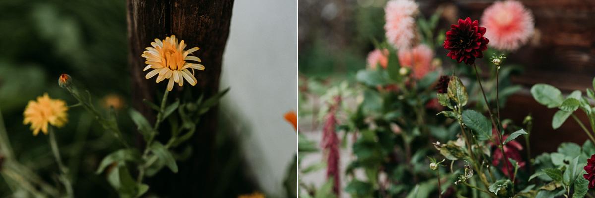 Wiejskie rustykalne kwiaty