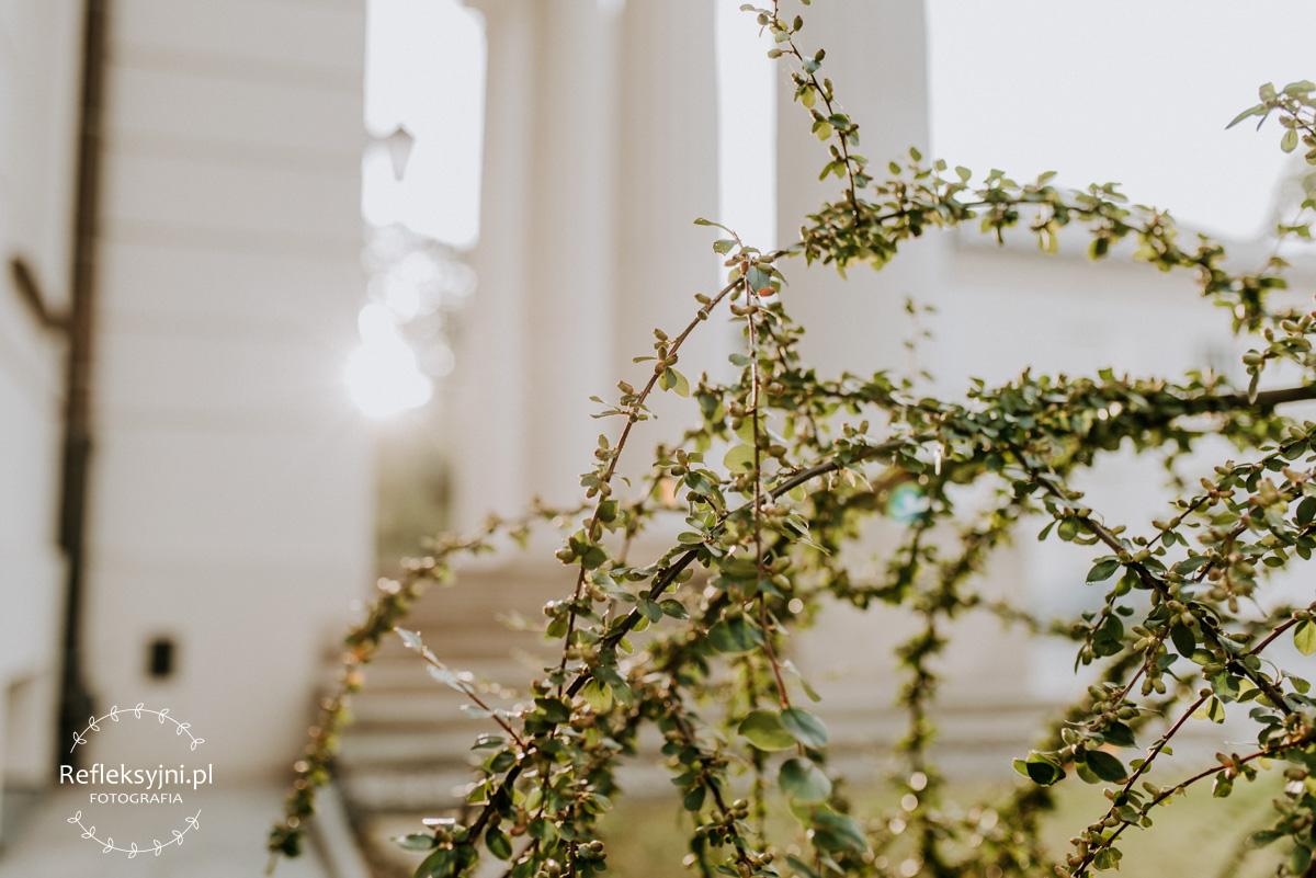 Roślina przed Pałacem w Dęblinie