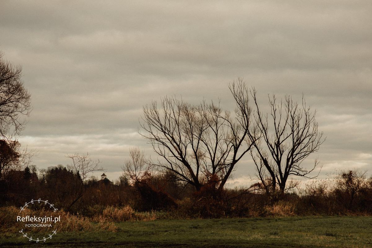 Drzewo na zachmurzonym niebie