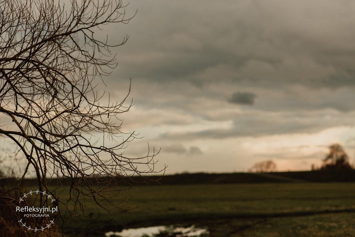 Drzewo i zachmurzone niebo