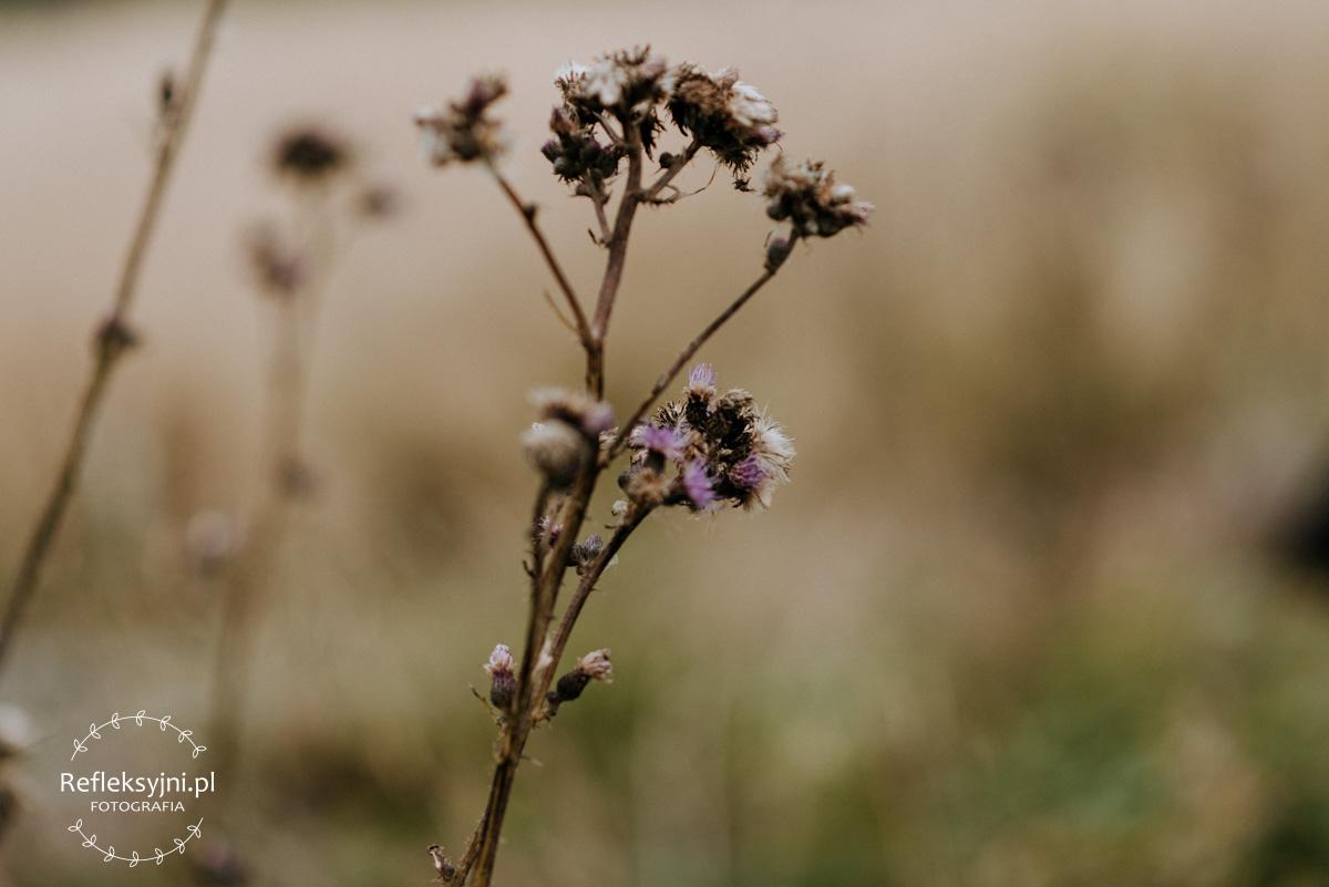 Kwiat na Rusinowej Polanie
