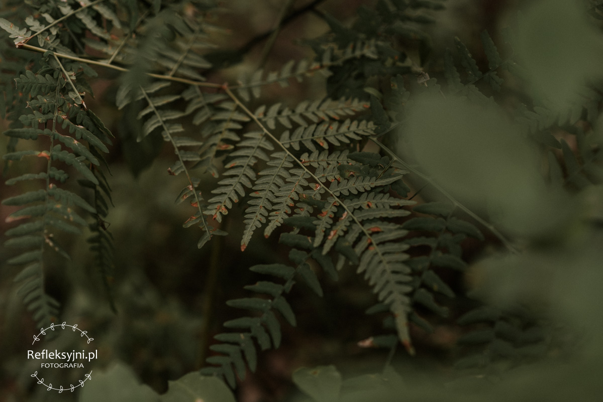 Paprotka w lesie